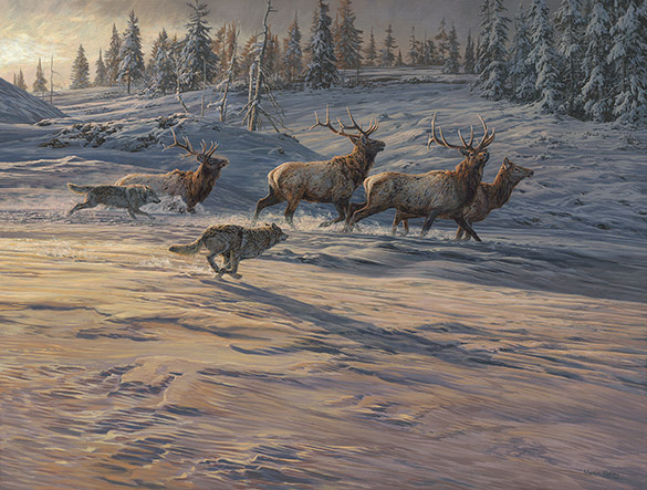 Gray wolves chasing American Elk or Wapiti original oil painting